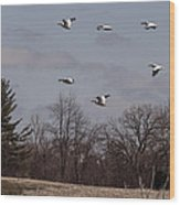 American Pelican Fly-over Wood Print
