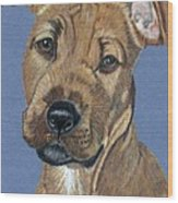 American Pit Bull Terrier Puppy Wood Print