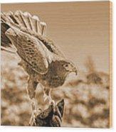 American Red Tail Hawk Wood Print
