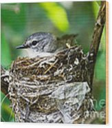 American Redstart Nest Wood Print