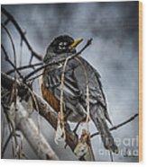 American Robin 2 Wood Print