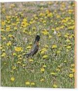 American Robin In A Field Of Dandelions Wood Print
