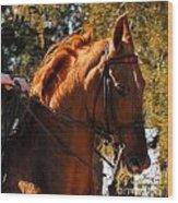 American Saddlebred 4 Wood Print