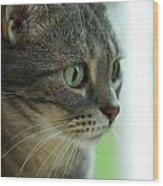 American Shorthair Cat Profile Wood Print