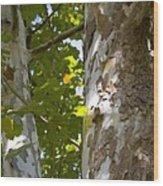 American Sycamore Wood Print