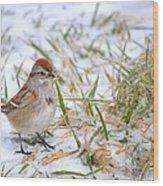 American Tree Sparrow Wood Print