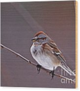 American Tree Sparrow In A Winter Setting Wood Print