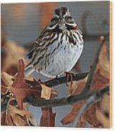 American Tree Sparrow No 2 Wood Print