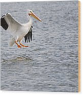American White Pelican Water Landing 2 Wood Print