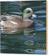 American Widgeon Duck Wood Print