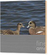 American Widgeon Pair Wood Print