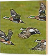 American Wigeon Drakes Wood Print