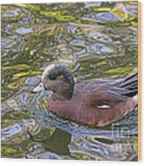 American Wigeon Wood Print