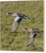 American Wigeon Pair In Flight Wood Print