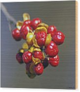 American Winterberry Wood Print