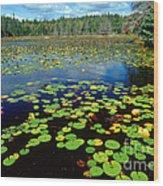 Ames Pond Wood Print