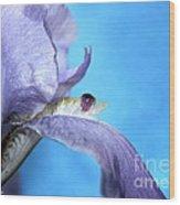 Amethyst Iris Wood Print