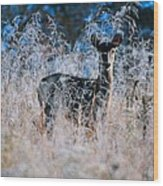 Amid The Frosty Wheat Wood Print