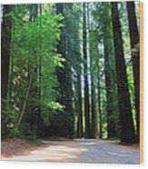Amidst Giants Wood Print