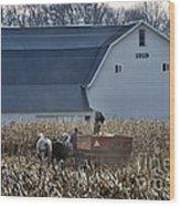 Amish Corn Picking And 1919 Barn Wood Print