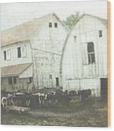 Amish Dairy Wood Print