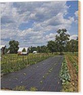 Amish Farm And Garden Wood Print