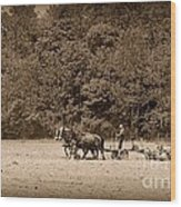 Amish Farmer Tilling The Fields In Black And White Wood Print