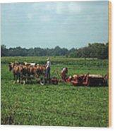 Amish Field Work Wood Print