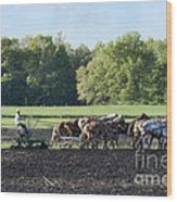 Amish Plowing Field Wood Print