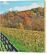 Amish Vinyard Two Wood Print