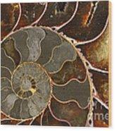 Ammolite Wood Print