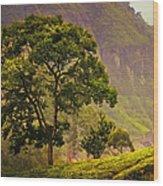 Among The Mountains And Tea Plantations. Nuwara Eliya. Sri Lanka Wood Print