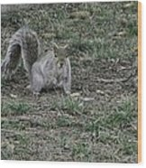 Gray Squirrel Among The Pine Cones Wood Print