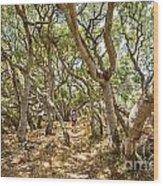 Among The Trees - The Mysterious Trees Of The Los Osos Oak Reserve Wood Print