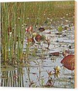 Among The Waterlillies 2 Wood Print