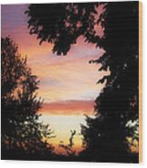 Ams 184 Wood Print
