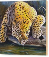 Amur Leopard  Spotted Something Wood Print