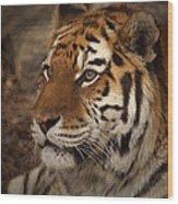 Amur Tiger 2 Wood Print by Ernie Echols