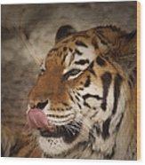 Amur Tiger 3 Wood Print by Ernie Echols