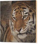 Amur Tiger 4 Wood Print