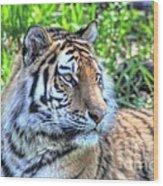 Amur Tiger 5 Wood Print