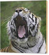Amur Tiger Wood Print