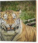 Amur Tiger Smile Wood Print