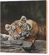 Amur Tiger Twin Wood Print