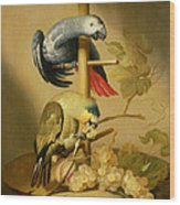 An African Grey And An Orange Winged Amazon Parrot On  A Perch With Grapes Wood Print