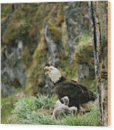 An American Bald Eagle And Chicks Wood Print