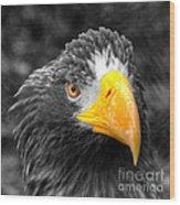 An American Eagle  Wood Print