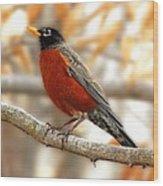 An American Male Robin Wood Print