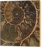 An Ancient Ammonite Pattern II Wood Print