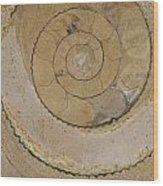 An Ancient Ammonite Pattern Vi Wood Print